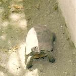 """Die """"Haus-Schildkröte"""""""