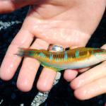 Keine Sorge, die Fische wurden gesund und munter zurück ins Meer gebracht