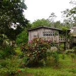 Foto di Soposo Rainforest Adventures