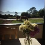 Breakfast with a view, the mini horses often join guests on the patio.
