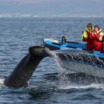 Amma Kibba and humpback fluke