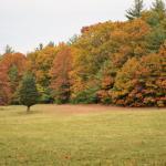 Callahan State Park Photo