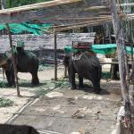Nosey Parker's Elephant Camp - Private Day Tours Foto