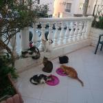 Photo of Otel Maro