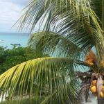 Coconut palm on Pereybere Beach