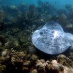 Snorkeling near Maya Luna
