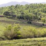 Es delicioso dar un paseo por la presa del río atravesando los viñedos y olivares