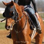 See what it takes to become a racehorse.