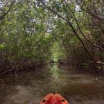 In the mangrove tunnels