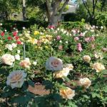 @ Wrigley Gardens 12