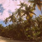 Coconut trees on the coast