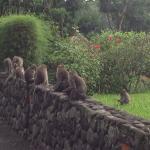 Landscape - Alila Ubud Photo
