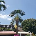 Photo of Swiss Palm Beach