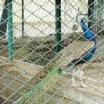 Zoo...