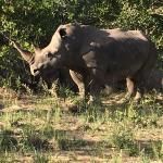 Bilde fra Elephant Plains Game Lodge