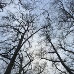 Mirando hacia el cielo en invierno