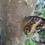 Emsflower Schmetterlingsattraktion