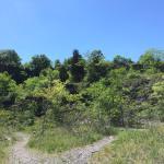 Ruffner Mountain Nature Preserve Foto