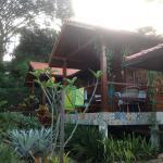 Obraz Aratinga Inn