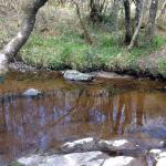 A nearby stream in the Slieve Bloom