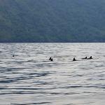 dolphins between islands