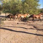 Foto di Rancho de los Caballeros