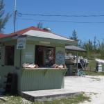 The Conch Stand