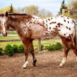 Healing With Horses at Wildrose Horse Farm