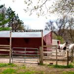Healing With Horses at Wildrose Horse Farm, Inc.