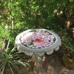 Фотография Sonya's Garden B&B