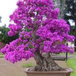 Color de la vegetación en Finca Malaga