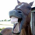 horsesmiling_large.jpg
