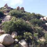 trail landscape