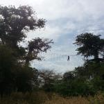 Photo de Accrobaobab Adventure