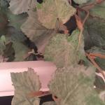 verdreckte Zimmerpflanze