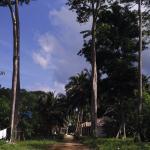 Pearl Park Beach Resort Foto