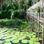 Visita ao Lago da Vitória Régia