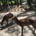 Lot of deer