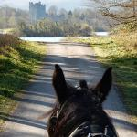Horse and Cart ride through the national park.
