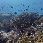 Foto de Taveuni Ocean Sports