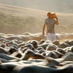 Giovanni e le sue pecore