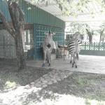 Photo de Warthogs Bush Camp
