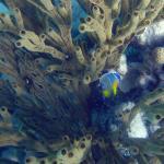 Akumal Dive Center Foto