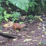 Un pequeño animalito que nos visito