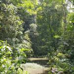 Vista del bosque rumbo al tour de chocolate