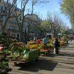 The Avenue on Market Day ( 2 mins from Hotel)