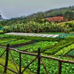 Ingredientes Orgânicos da Nossa Horta