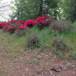Flowers along the pathway at Vestal Gap Road park