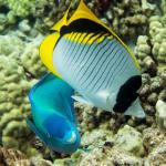 Foto de Sandwich Isle Divers