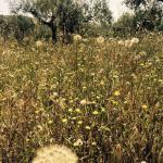 Eumelia Organic Agrotourism Farm & Guesthouse Picture